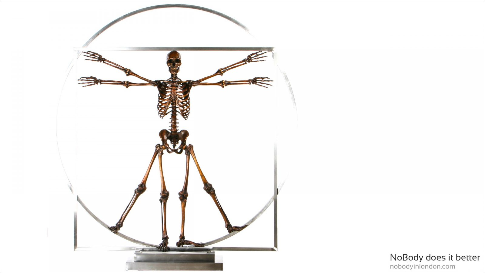 NoBody does it better, life size bronze skeleton in stainless steel frame based on Leonardo da vinci vitruvian man