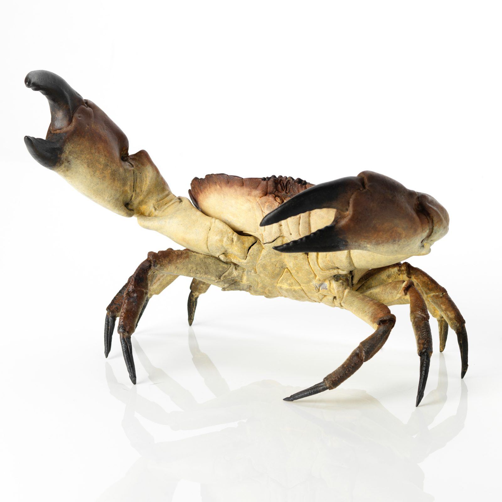 huge bronze crab