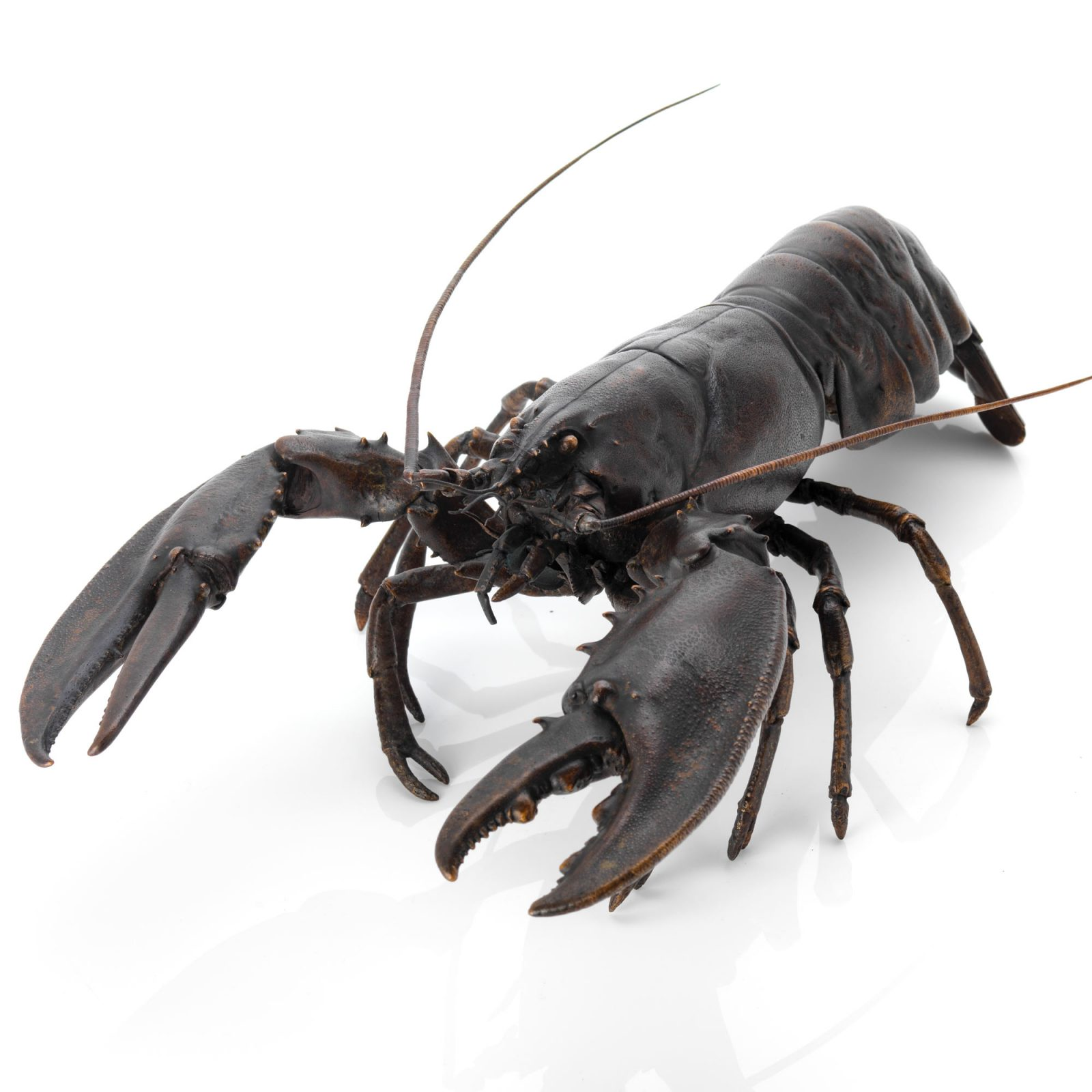 Product categories crustacean | Bronze skeleton fine art sculpture