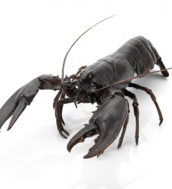 fine art bronze lobster