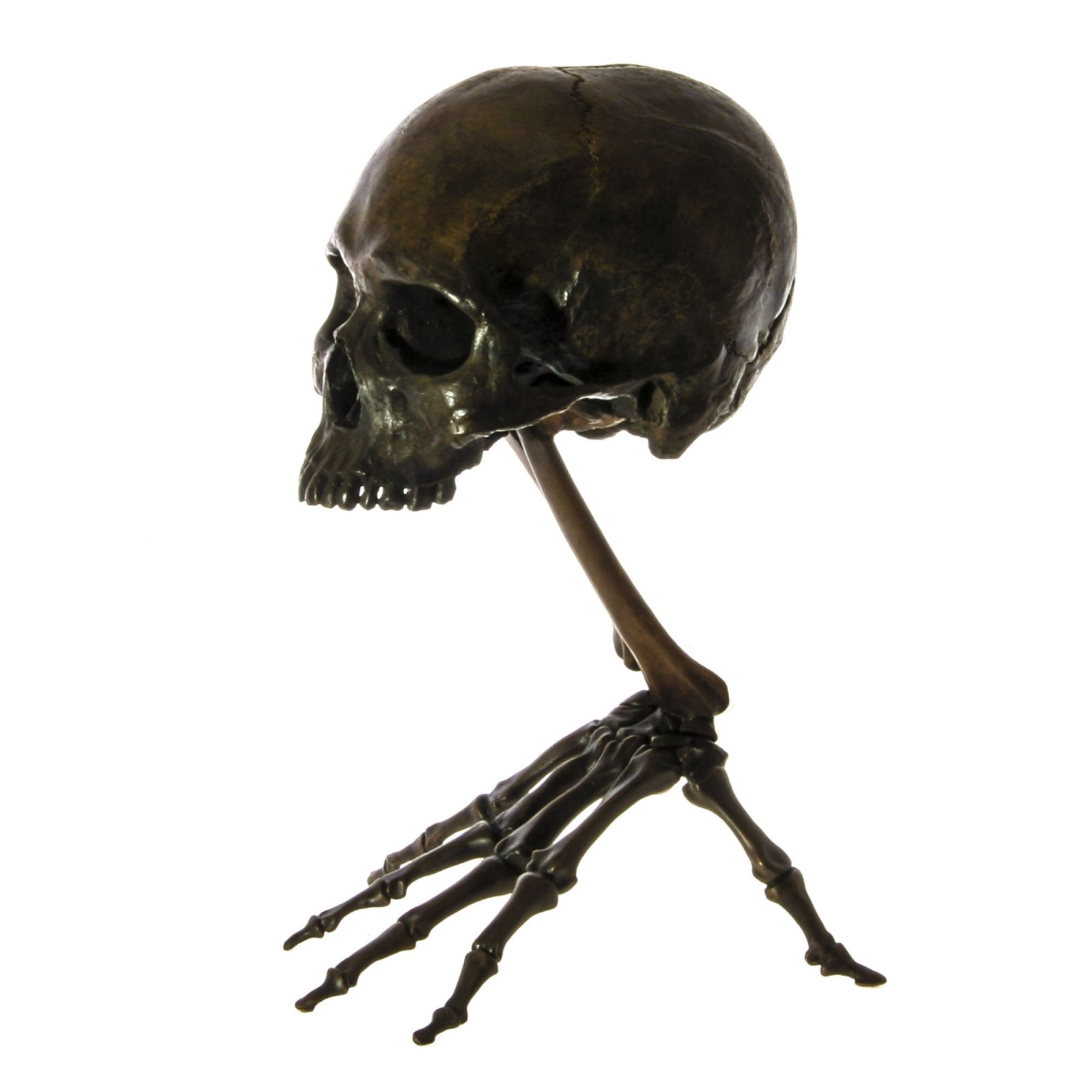 skeleton hand with skull fine art bronze