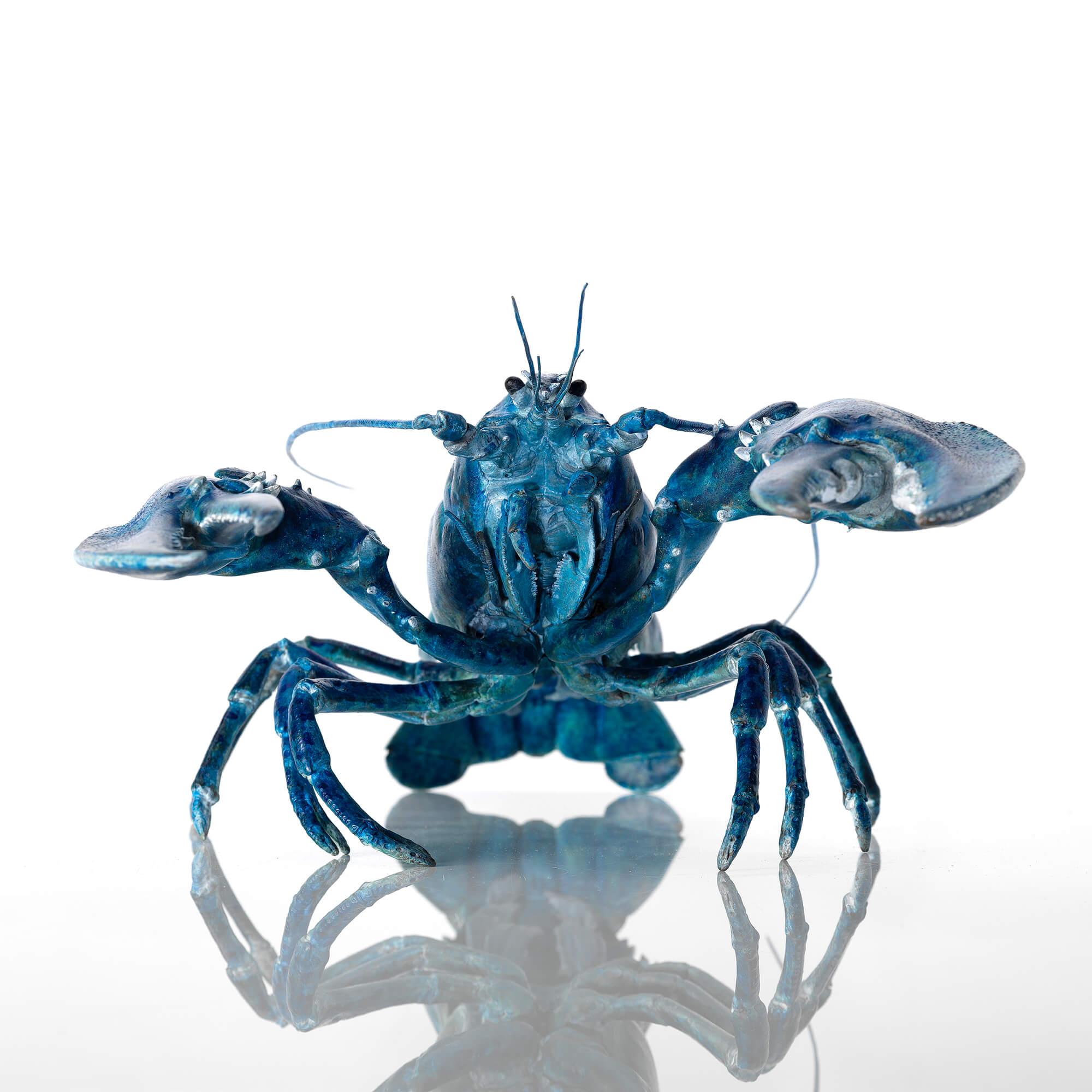 Blue bronze lobster